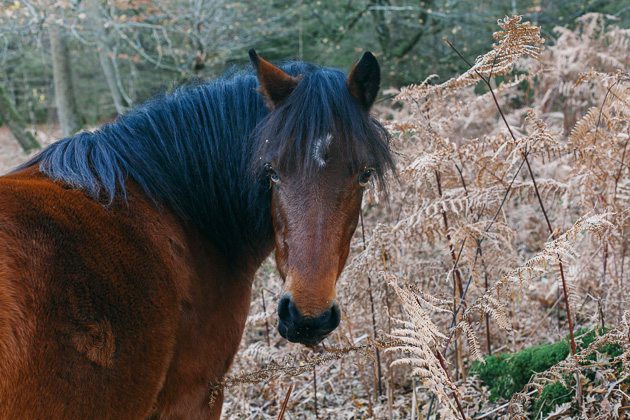 horse with huge eyes