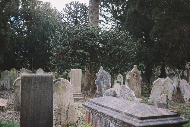 monkey-puzzle graves