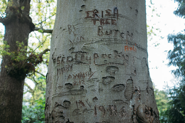 graffitree
