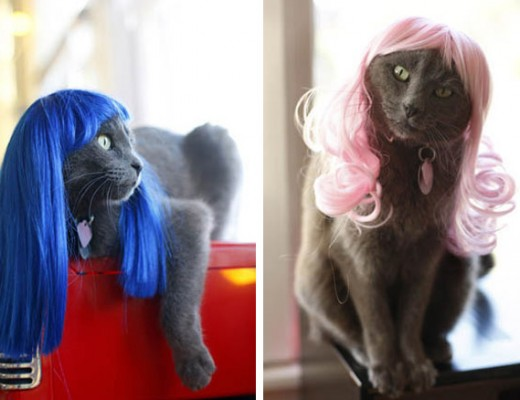 cats-in-wigs