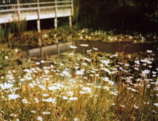 daisy-pond-630