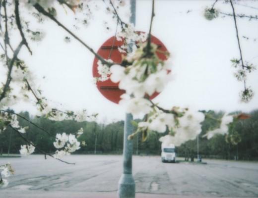 fuji-instax-mini-25-blossom-japan