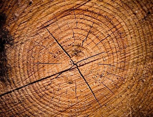 log-closeup