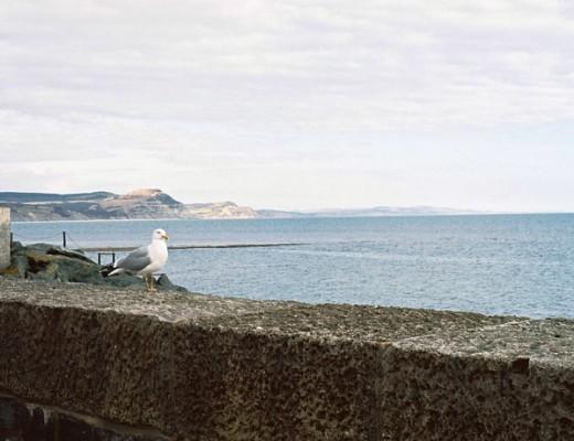 pentax-gull