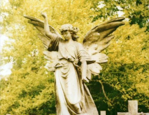 pola-angel