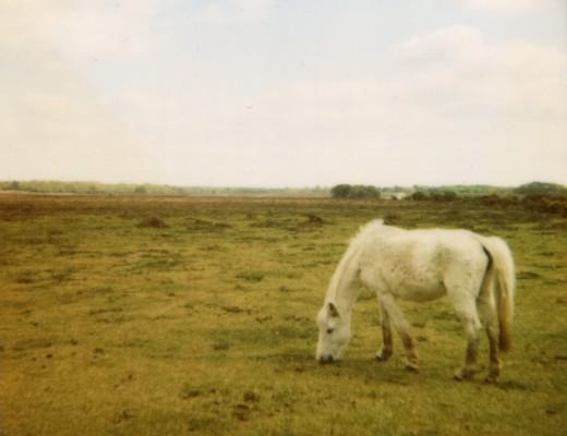 pola-pony