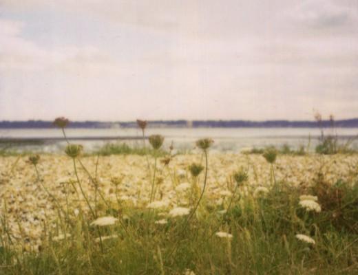 pola-shore