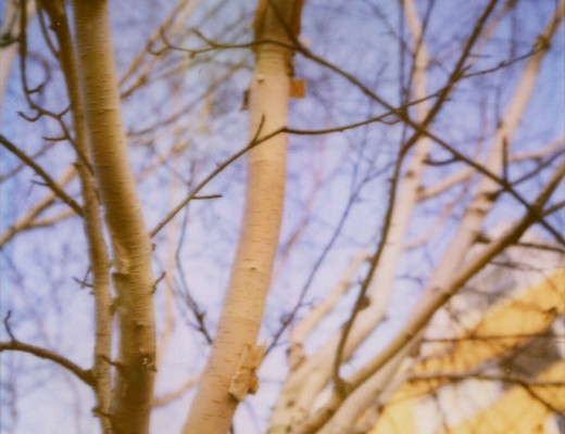 pola-tree