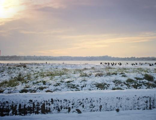 snowy-shore1