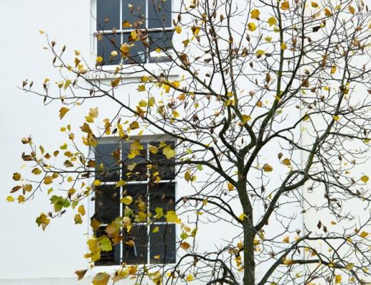 urban-tree