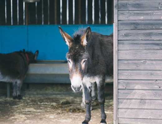 i love donkeys!