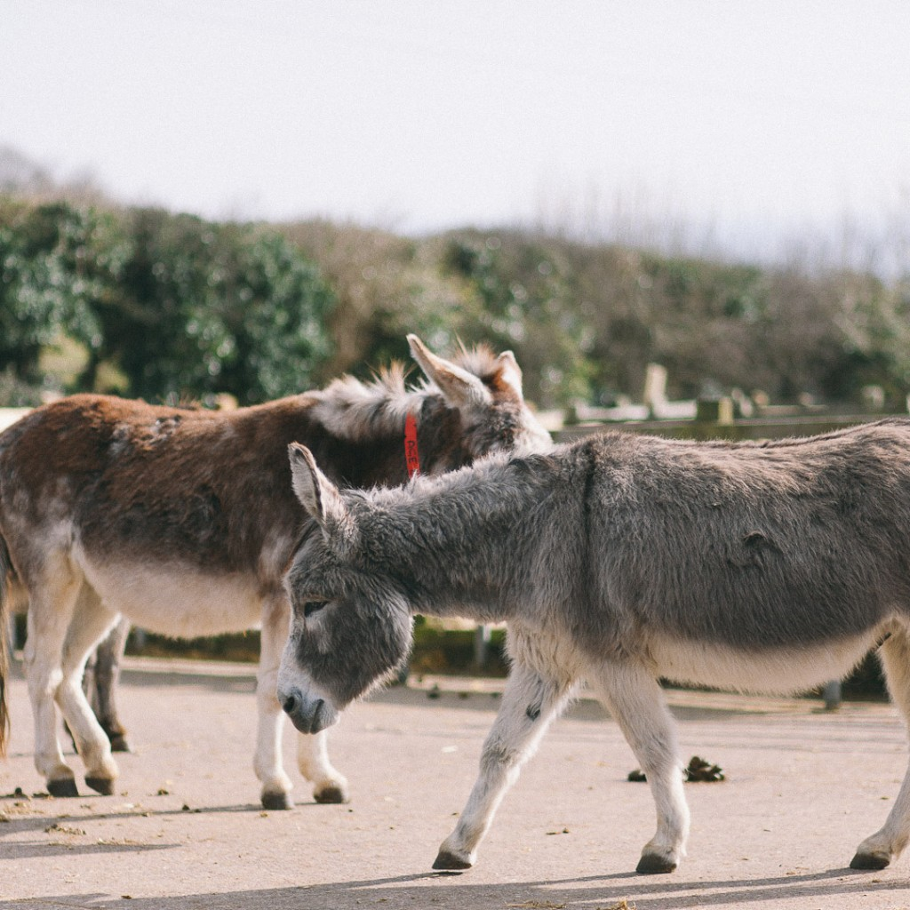 two lovely donkeys